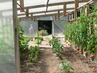 Greenhouse Vegetable Gardening