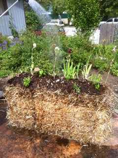 Alternatvie vegetable garden designs