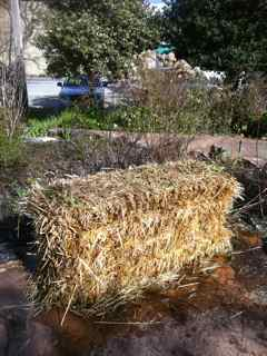 growing plants in hay bales Alternatvie vegetable garden designs