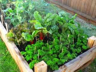Organic Vegetable Gardening The