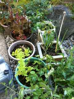 No room for a ve able garden Ve able gardening containers are your answer Do you live in an apartment condo or have a shady backyard