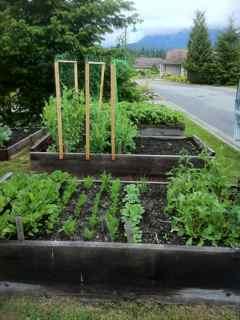 growing great veggies